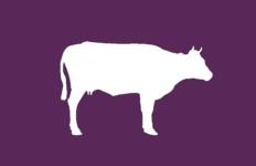 ZACP - Purple Cow capitalist party
